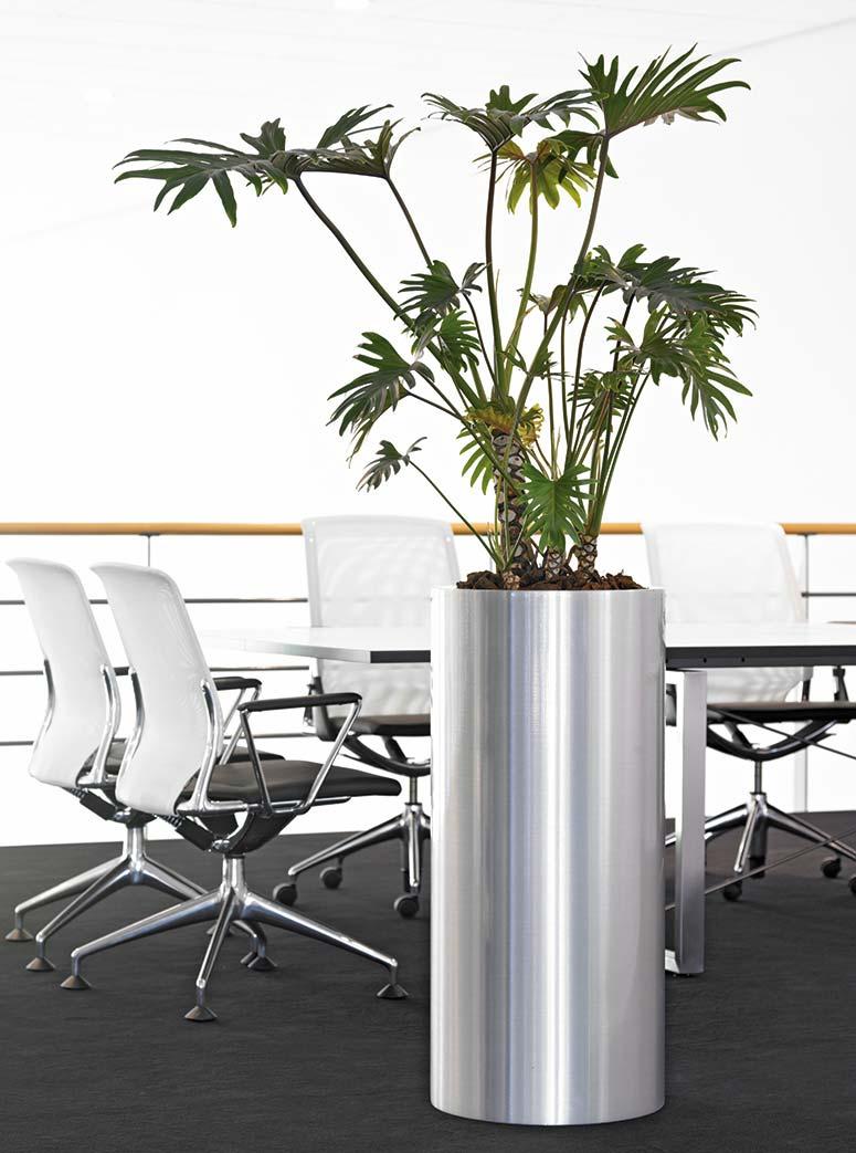 Alugefäß Büropflanzen Besprechungsraum, akzente raumbegrünung