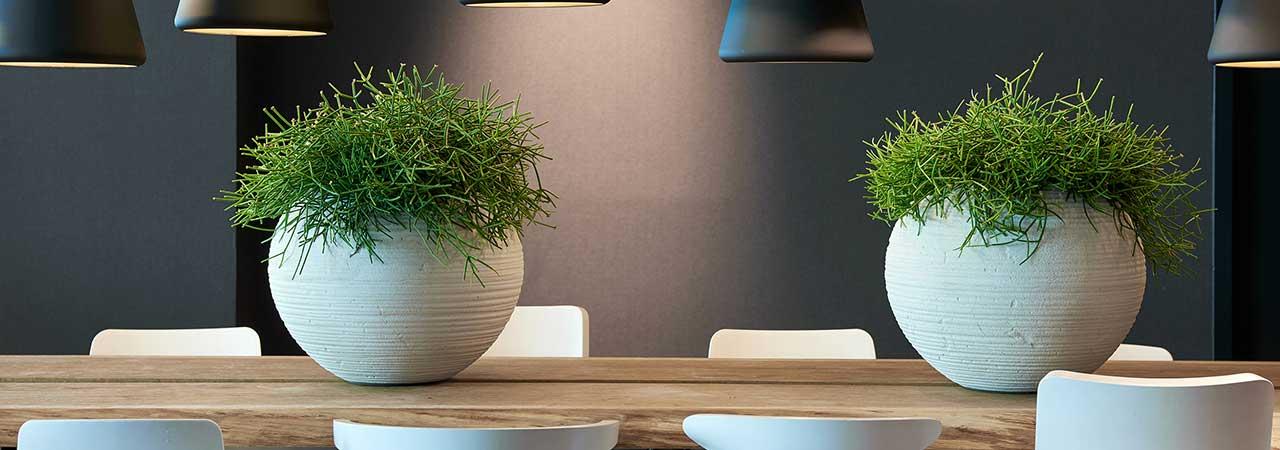 Natürliche Pflanzgefäße, Besprechungsraum