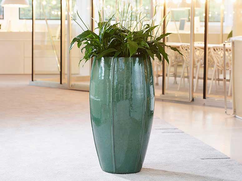 Büropflanzen Keramikgefäß, akzenre raumbegrünung
