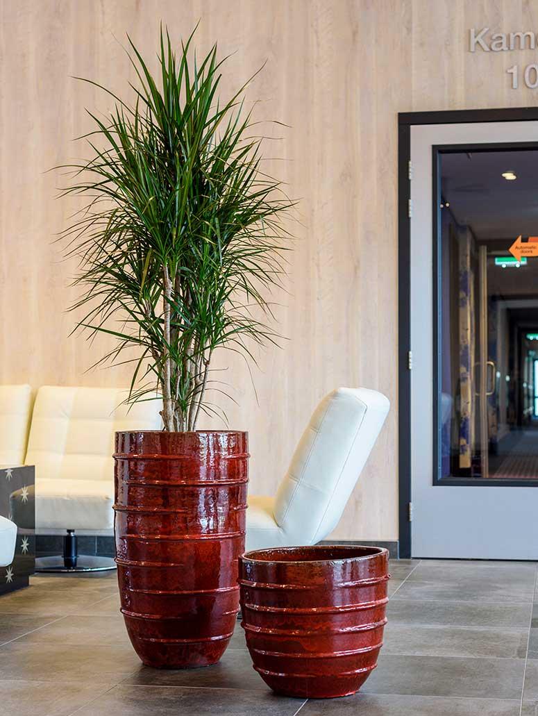 Büropflanzen Pflanzkübel Keramik, akzente raumbegrünung