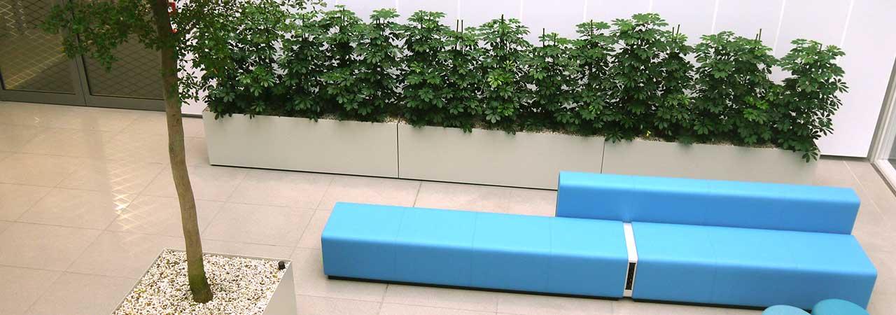 Foyer Atrium Baum Zimmerpflanze Innenbegrünung, akzente raumbegrünug
