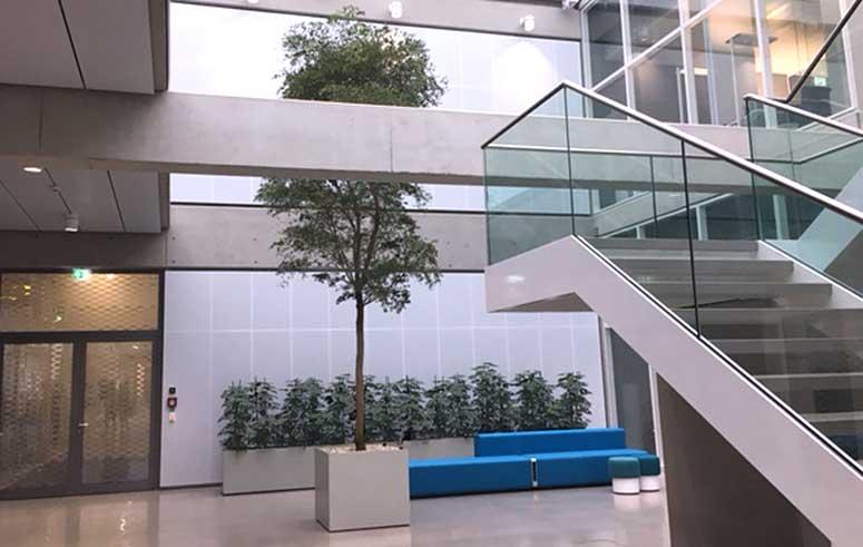 Foyer Atrium Zimmerpflanze Baum Objektbegrünung, akzente raumbegrünung
