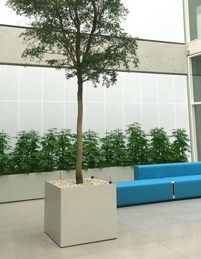 Foyer Empfang Innenraumbegruenung Akzente Raumbegruenung