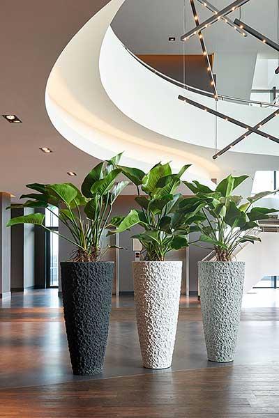 Foyer Pflanzgefäße, Pflanzen am Arbeitsplatz, akzente-raumbegrünung