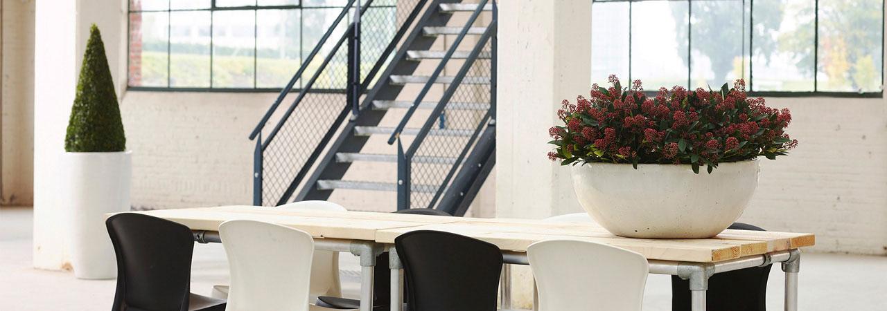 Keramikgefäß, Pflanzen am Arbeitsplatz, Besprechungsraum, akzente raumbegrünung
