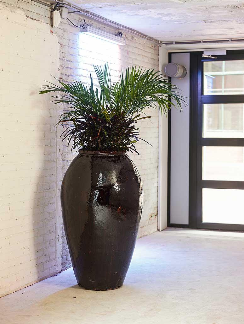 Keramikgeäß Buüroeinrichtung, akzente raumbegrünung