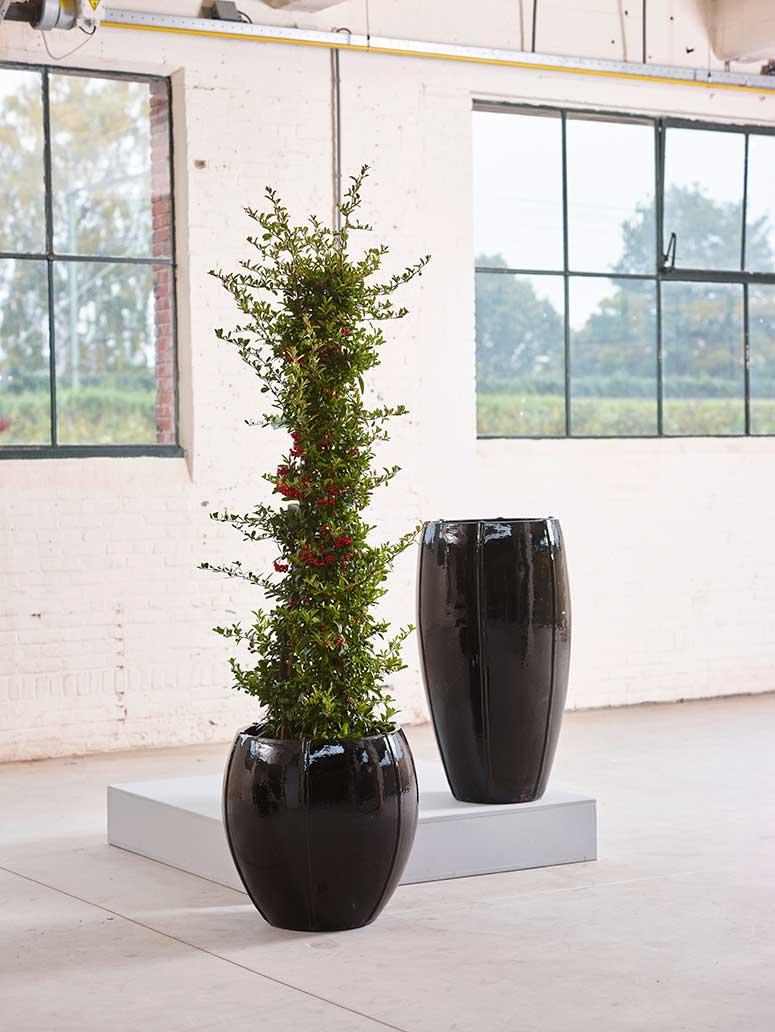 Keramikgefäße Pflanzen Leasen, akzente raumbegrünung