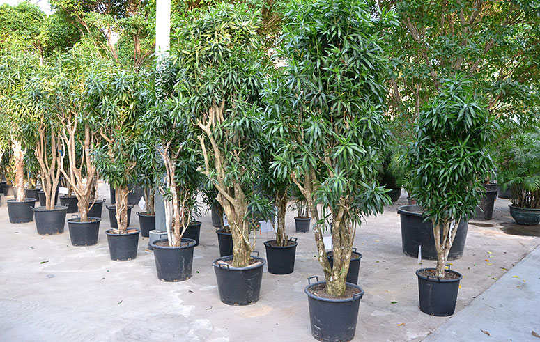 Textilpflanzen, akzente raumbegrünung