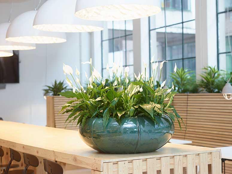 Pflanzen Büro, akzente raumbegruenung