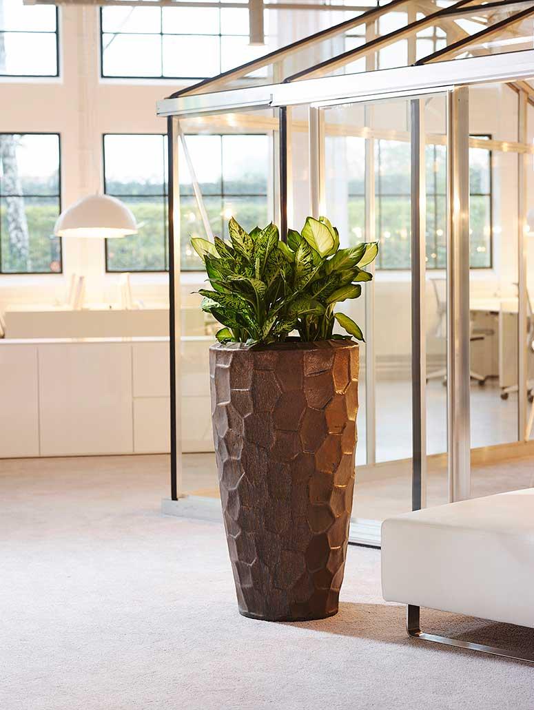 Pflanzen am Arbeitsplatz Keramikgefäß, akzente raumbegrünung