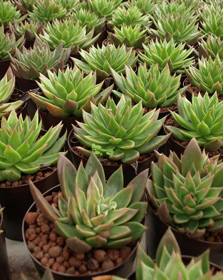 Pflanzen am Arbeitsplatz, akzente raumbegrünung