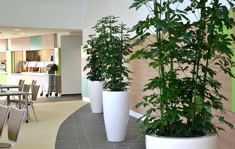 Pflanzkübel Hydrokultur, Kantine, akzente raumbegrünung