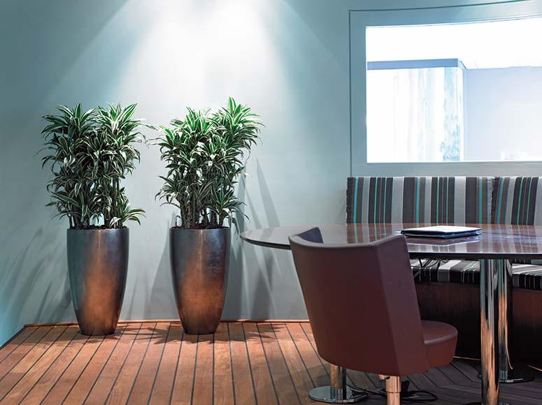 Pflanzkübel, hochwertige Bürobegrünung Besprechungsraum, akzente raumbegrünung