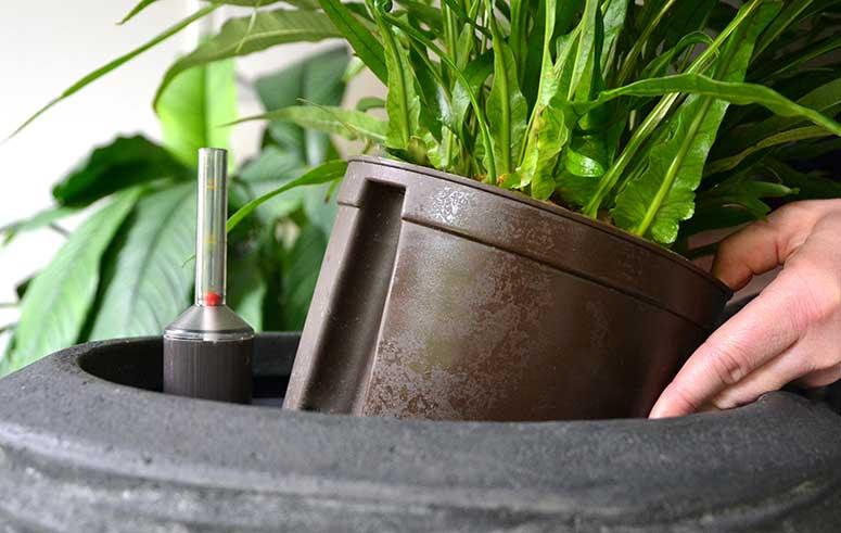 Umpflanzen, akzente raumbegrünung