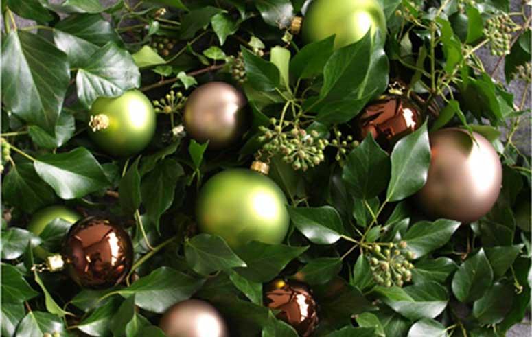 Weihnachtsbaumservice, akzente raumbegruenung