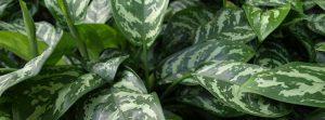 Pflanzenpflegeservice für den Erhalt von Büropflanzen.