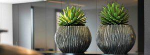 Pflanzen für Sideboards