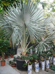Eindrucksvolle Pflanzen im Büro.