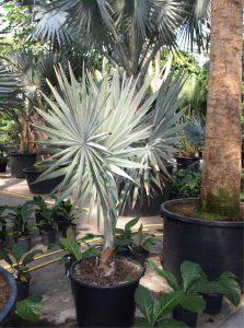 Große Pflanzen in Eingangsbereichen