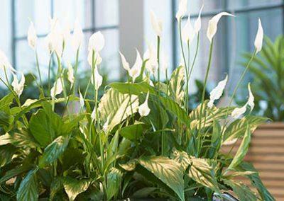 Einrichten mit Pflanzen