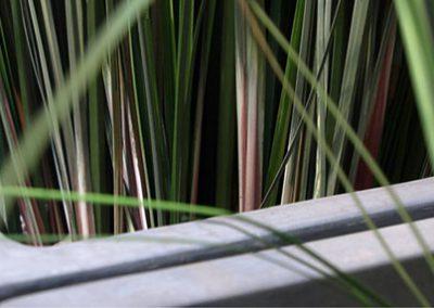 Textilpflanze