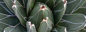 Pflanzenwände mit Hydrokultur