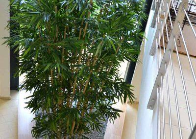Bambus Gras Kunstpflanze Im Pflanzbecken Akzente Raumbegruenung