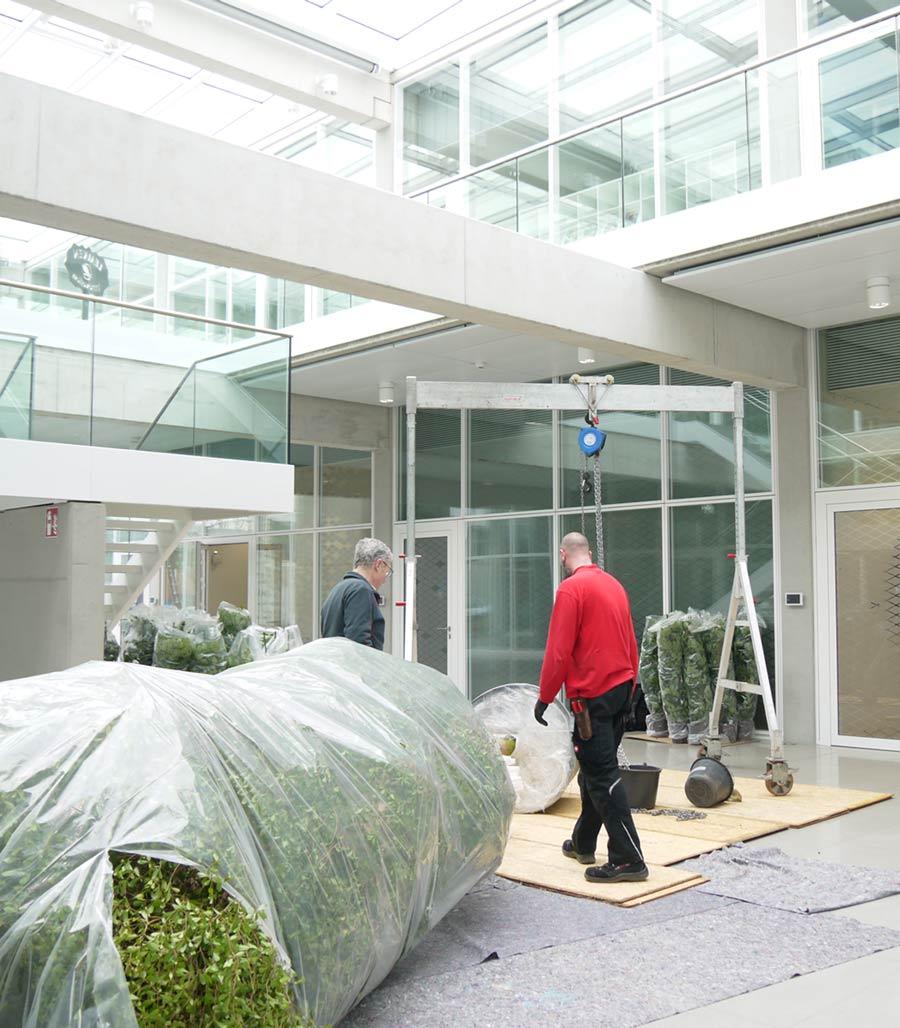 Lieferung und Aufstellen von Großpflanzen im Innenraum, akzente raumbegruenung
