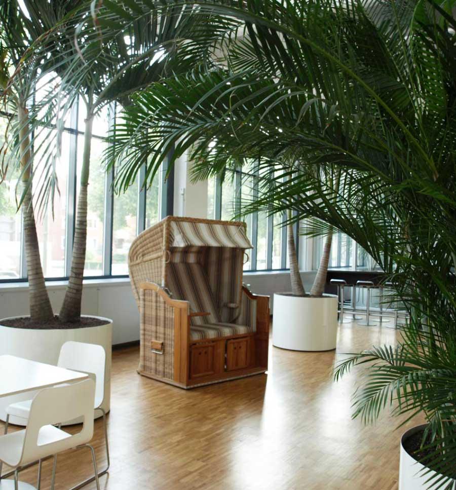 Großpflanzen in Katine/Cafeteria, Palmen in Edelstahlgefäßen, akzente raumbegrünung