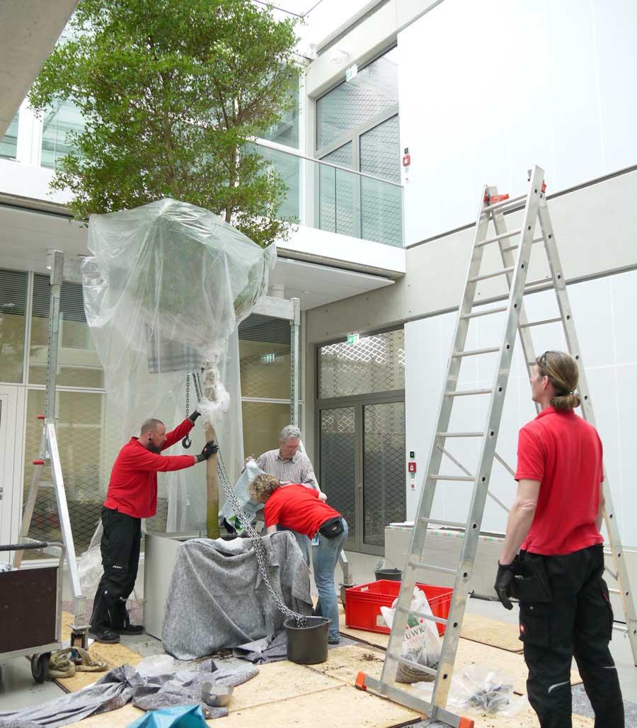 Lieferung und Aufstellen von Solitaerpflanzen im Innenraum