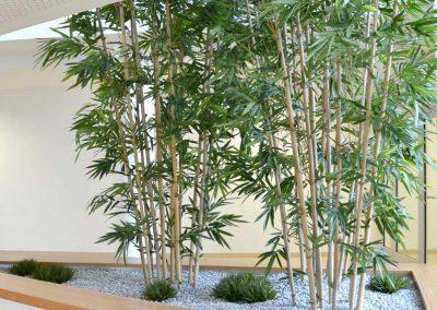 Textilpflanze Bambus Im Pflanzbecken Akzente Raumbegruenung
