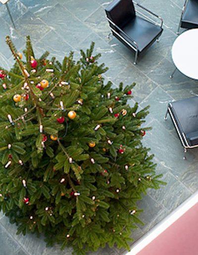 Weihnachtsbaumservice Akzente Pflanzen
