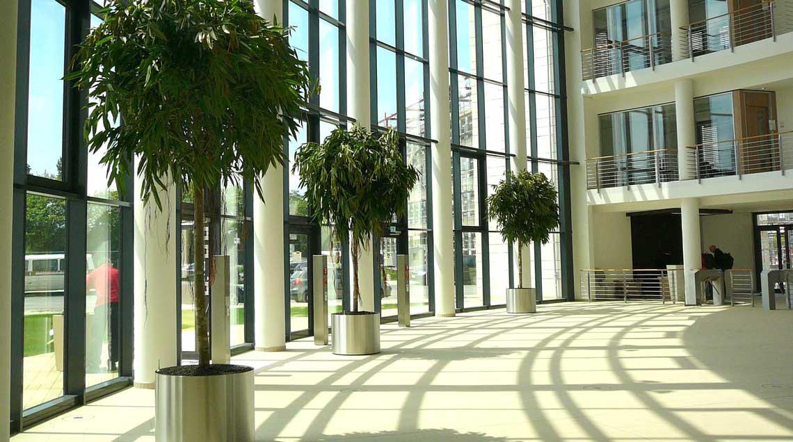 Großpflanzen im Foyer, Ficusbäume im Edelstahlgefäß