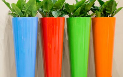 Viel Gefäß – wenig Pflanze