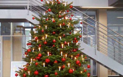 Alle Jahre wieder: unser Weihnachtsbaumservice startet.