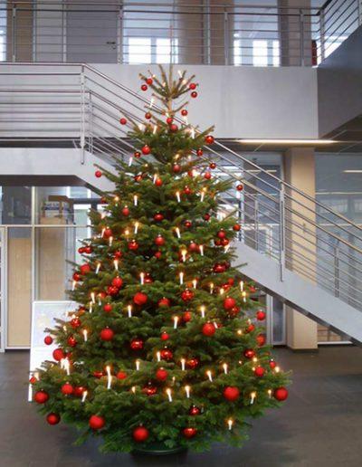 Weihnachtsbaumservice Akzente
