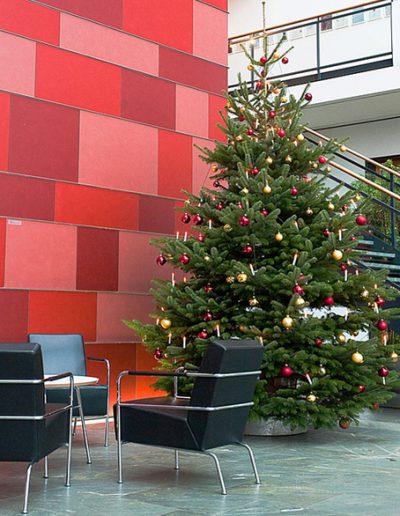 Weihnachtsbaumservice Akzente Raumbegruenung