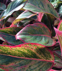 Die Büropflanze als natürliche Klimaanlage