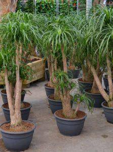 Büropflanzen sind produktive Pflanzen.