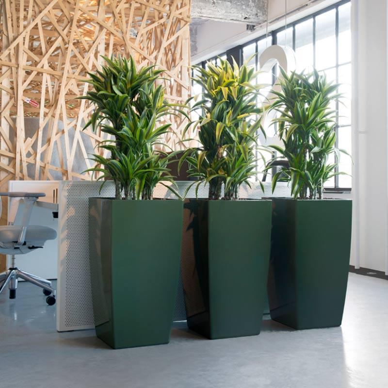 Pflanzen am Arbeitsplatz strukturieren das Großraumbüro in Arbeitsbereiche