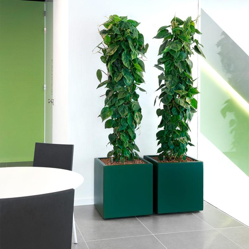Büropflanzen sorgen für eine verbesserte Arbeitsproduktivität