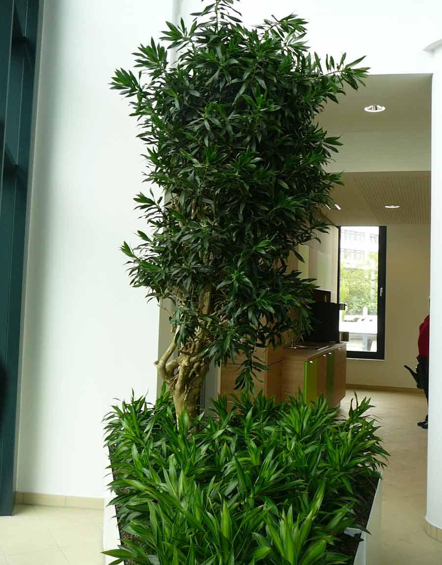 Pflanzbecken mit Zimmerpflanzen - Hydrokultur bepflanzt