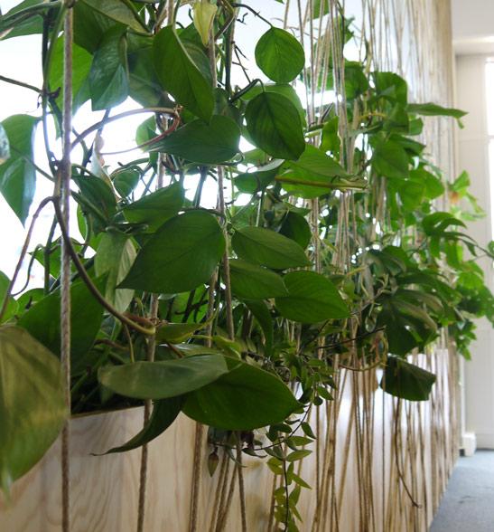 Raumtrennsystem mit eingelassenen Pflanzgefäßen, Begrünung mit Hydrokulturpflanzen