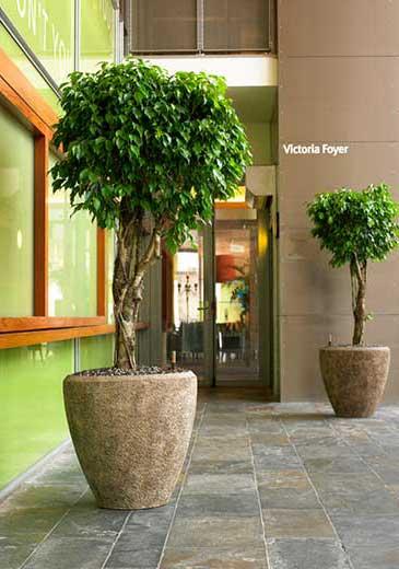 Pflanzkübel, Hydrokultur, Büropflanze, akzente raumbegrünung