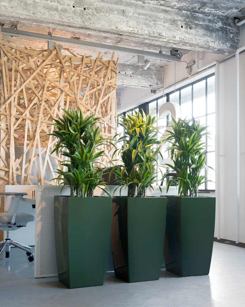 Bürobegrünung, Pflanzen als Raumteiler im Großraumbüro/Open Space