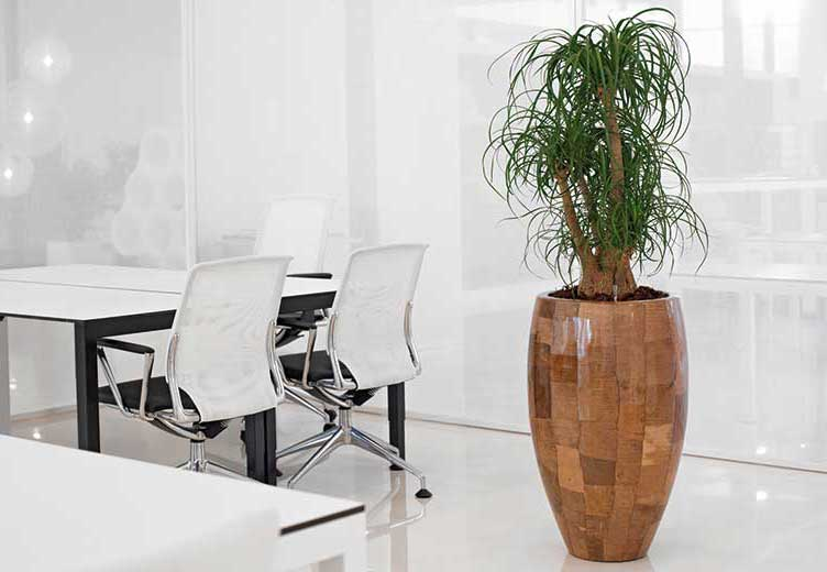 Bürobegrünung, Raumbegrünung, Pflanzkübel, akzente raumbegrünung