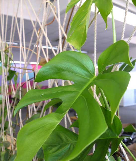 Pflanzen im Büro sorgen für ein positives am Arbeitsumfeld