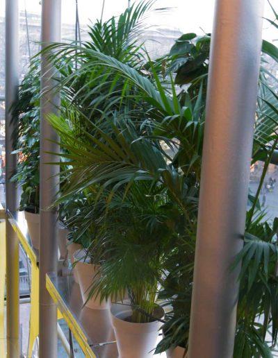 Fassadenbegruenung Essen Pflanzen Im Urbanen Raum