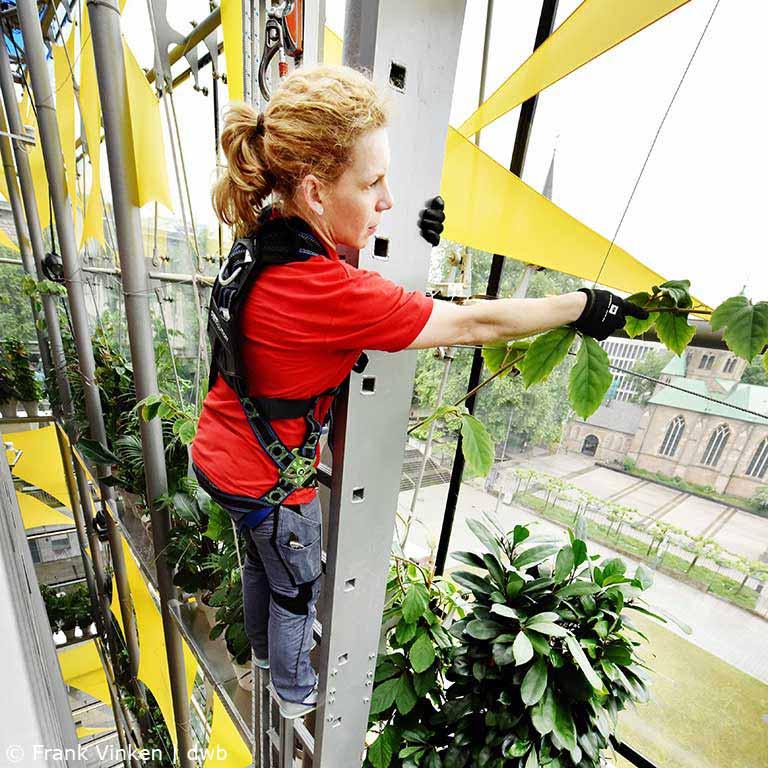 Fassadenbegrünung, GRowEEN Grüne Hauptstadt Europas, Fank Vinken, akzente raumbegrünung