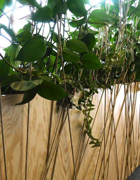 Pflanzen im Büro sorgen für ein gutes Raum- und Arbeitsklima